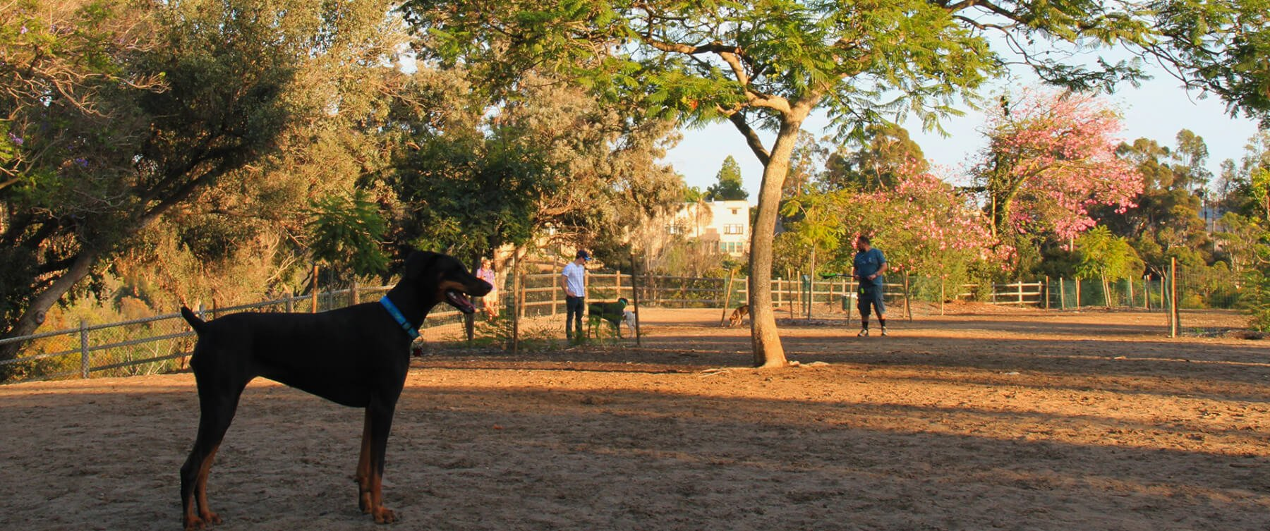 San Diego Off Leash Dog Parks